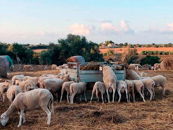 Llena tu despensa de productos locales y de proximidad de las Islas Baleares!